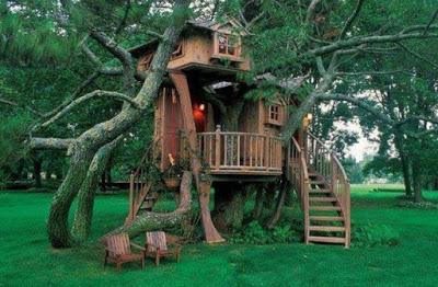 gambar rumah pohon sederhana