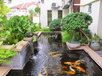 kolam ikan rumah idaman